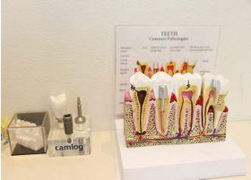 歯周病の治療に力を入れています。