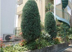 院外の草木は、フラワーアレンジメントの方にお願いして整えました。来院される方々にもぜひじっくりとみていただければ幸いです。