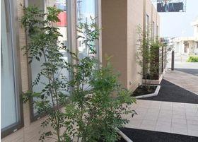 建物の窓辺には植物を植えるなど、リラックスできる歯科医院のために工夫しております。