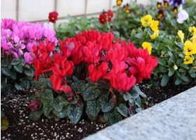 花壇には、季節のお花が咲いています。変化もお楽しみください。