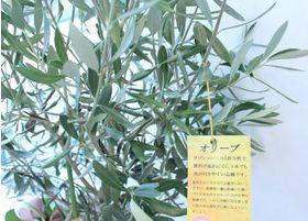 院内には観葉植物を備えています。