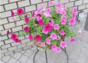 外に出るとすぐに花がさいています