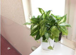 観葉植物を設置しております。
