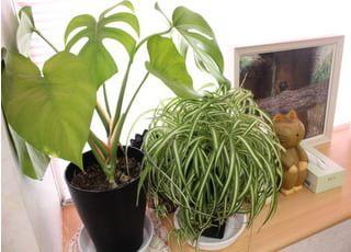 観葉植物があることで、リラックス空間を演出しております。