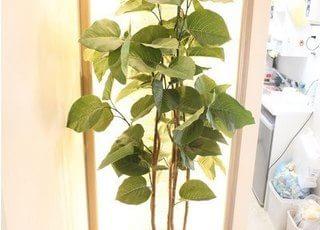 観葉植物を飾り、リラックス作用を高めています。
