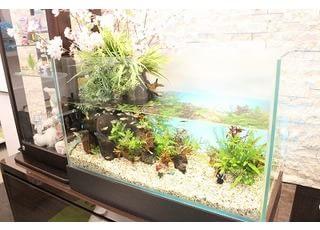 水槽で熱帯魚を飼育していますので、お待ちの間にぜひお楽しみください。