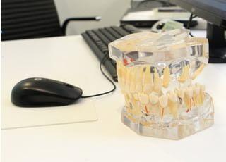 歯の模型を活用したご説明も行っております。