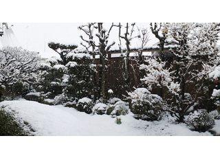 医院の奥に庭園がひろがっています。雪が降れば診療台からこの風景が正面に見えます。