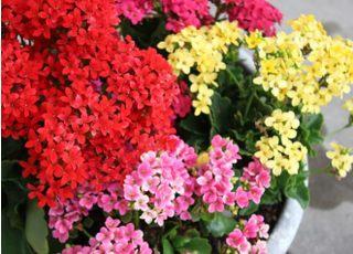 花を植えることで外観に華を添えております。