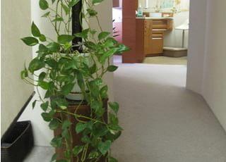 高橋歯科医院イチオシの院内設備2