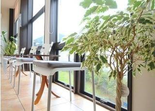 観葉植物です。リラックスしていただける空間づくりを心がけております。