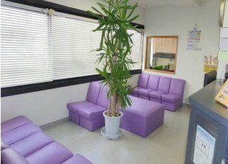 待合室には患者様を癒す観葉植物を置いています。