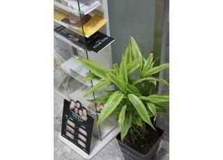 リフレッシュ作用を期待し、植物も配置しております。