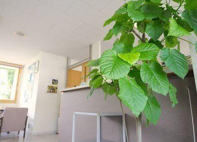 院内にはたくさんの観葉植物を飾っております。