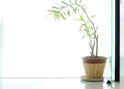 院内には観葉植物等を設置し、リラックスしていただける空間づくりを心がけております。