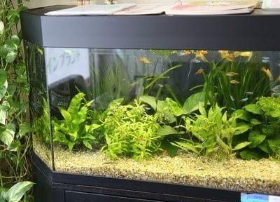 院内には水槽にお魚も飼育しております。