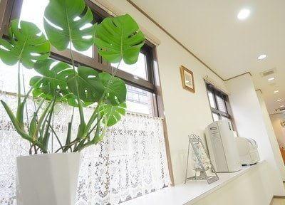院内は観葉植物などを設置しています。
