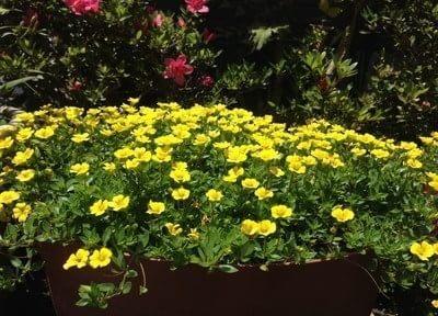 院長が花を育てています。自然と語らうのも趣味のひとつ。季節感を味わうのが目的でしたが、個性を表現する花たちに色々な自分があっていいと教えられています。
