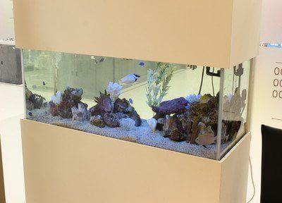熱帯魚を飼育しています。リラクゼーション効果があります。