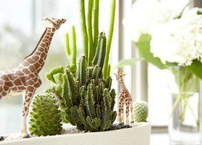 院内は観葉植物等を設置し、リラックスしていただける空間づくりを心がけております。