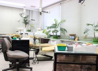 診療室内は、リラックスできるように配慮しています。