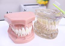 健康な歯で充実したくらしのために虫歯予防が大切です