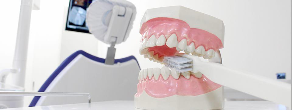 歯の模型とチェアー