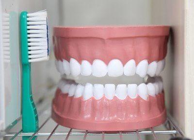 歯の模型です。こちらを使用して、説明を行います。