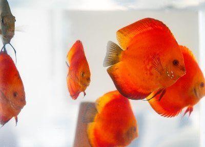 可愛らしいお魚たちです。