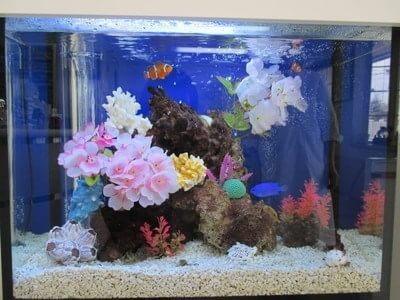 佐々木先生の好きな熱帯魚です。見ているだけで飽きません。